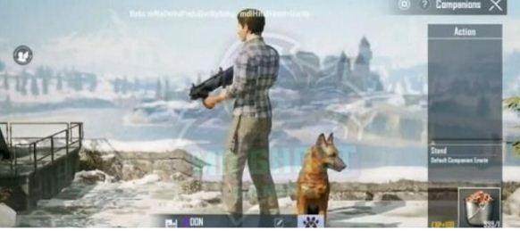 和平精英宠物猎犬怎么获得