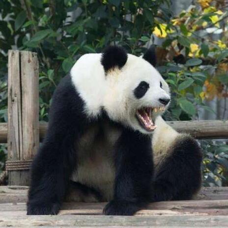食铁兽是什么动物